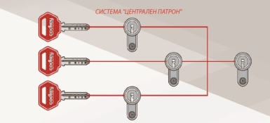Система центрального цилиндра